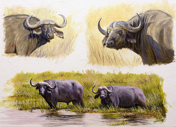 cape-buffalo-final-copy1
