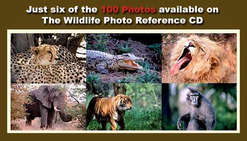 wildlife reference photos - royalty free