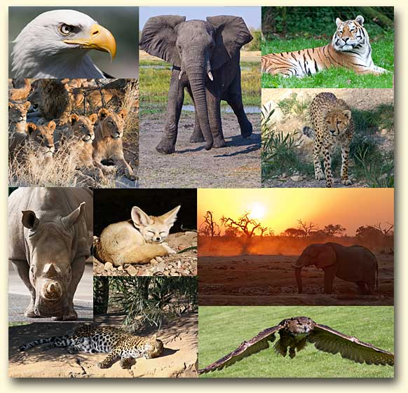 wildlife-reference-photos