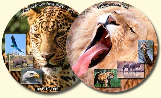 wildlife reference photos royalty free