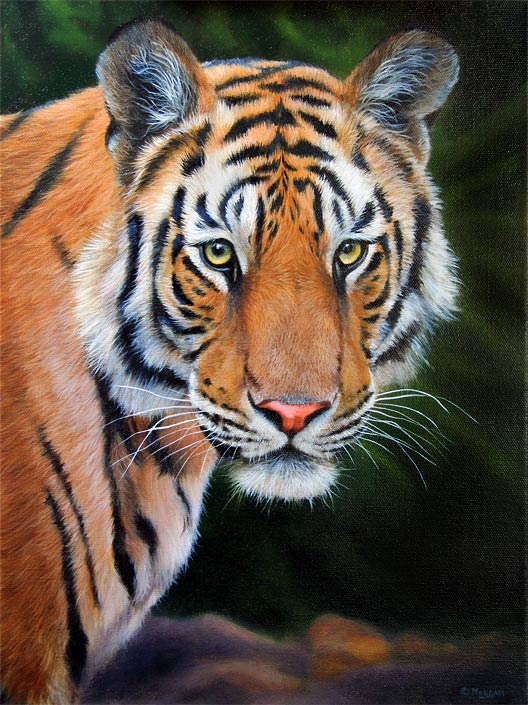 tiger-oil-portrait
