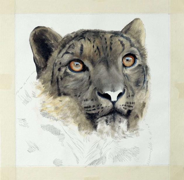 how to paint a snow leopard